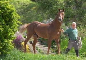 twister, notre étalon quarter horse avant une saillie