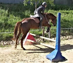 Etalon quarter horse : Twister Bell Kingdoc à l'obstacle