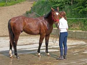 poulain quarter horse à la douche