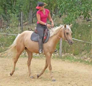 Jument Quarter Horse palomino au débourrage