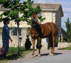 jument Quarter horse sorrel : Tina San Leopan, fille de King Flit Leopan