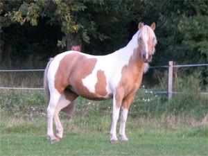 quarter pony : Sakura of Chen au parc