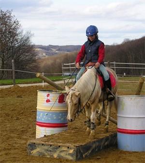 Quarter pony : Sakura of Chen au travail