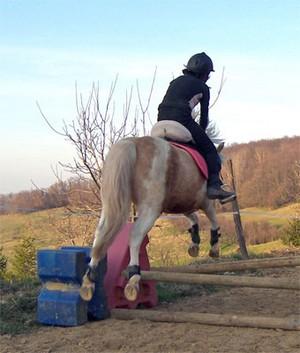 quarter pony : Sakura of Chen a l'obstacle