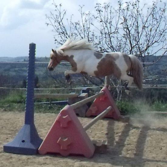 quarter pony sautant