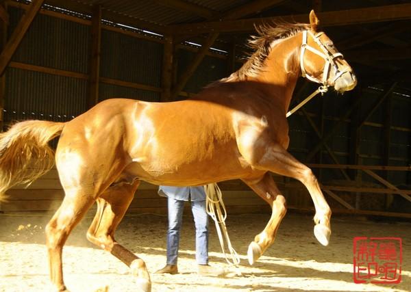 Etalonquarter horse : Twister Bell Kingdoc
