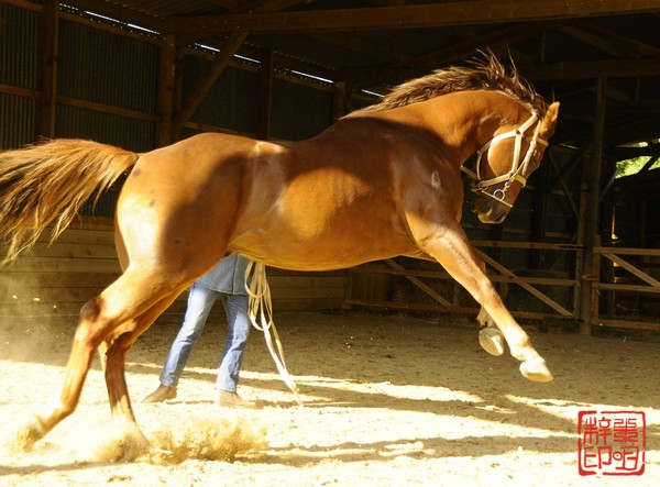 quarter horse : ça pulse !