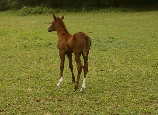 fille de Twister Bell Kingdoc, étalon quarter horse